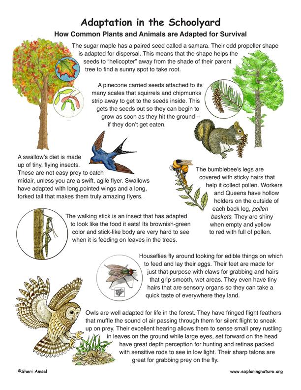Animal Adaptation poster